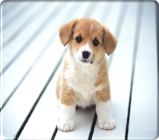 image taken from http://thundafunda.com/wp-content/uploads/2007/09/019pet-animal-dog.jpg