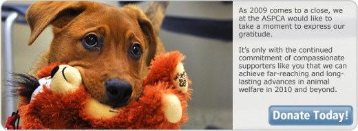 Image from the ASPCA