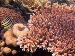 A view under Kepulauan Seribu water (Photo: William Sebastian, Foto Kita, National Geographic Indonesia)