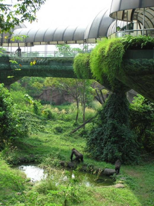A view in Schmutzer Primate Center.