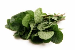 Mint is a Culinary Herb and also as a Medicinal herb as well as this