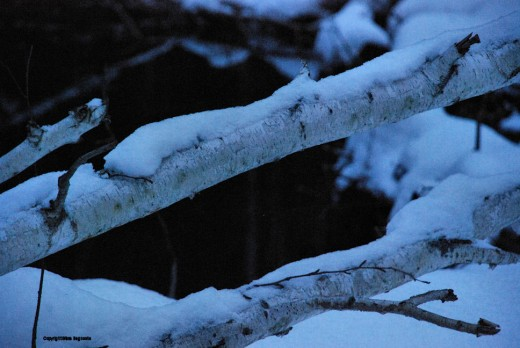 In the late evening, with a slow, hand-held exposure,snow takes on a bluish hue.