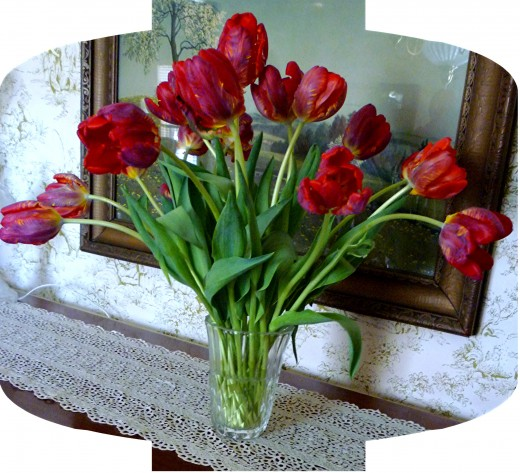 The 18 tulips in the Val Saint Lambert vase