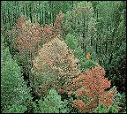The Southern Pine Beetle kills thousands of trees every year. Utilize this source to reduce home heating costs and help the environment.