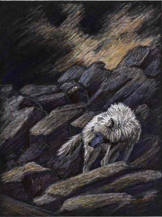 "A White Wolf by Robert A. Sloan, 7"" x 9 1/2"" in Cretacolor pastel pencils on Anthracite color ClaireFontaine PastelMat."