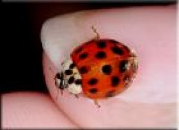 If you find a ladybird inside your house in winter, it will not survive because it is too warm and dry. You can help it by putting it outside, in a sheltered place, such as a shed, unheated garage, a log pile or in a ladybird hotel. Dont put it on tw