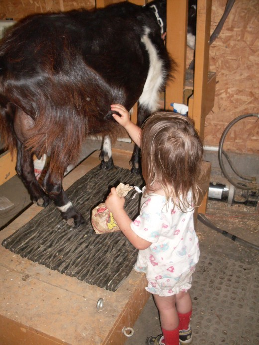 "My daugher, ""Tyger"", likes to pet the goats, and always speaks to them nicely. (That's a bag of popcorn she's holding. They like that, too.)"