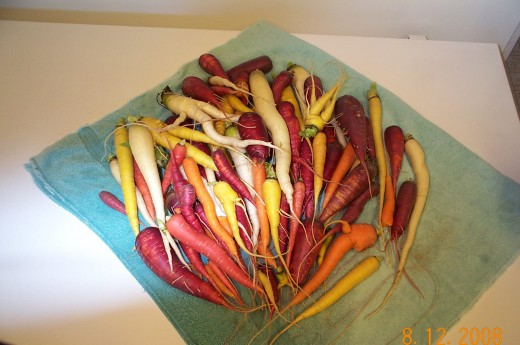 Orange isn't the only color carrots come in.