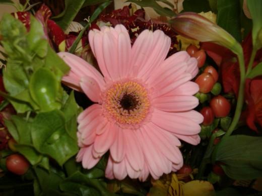 Flower in an arrangement