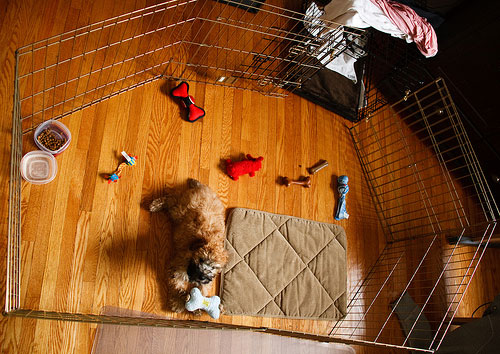 Dog Pen with Crate and All the Trimmings