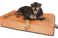 Five Things to Know About Buying a Memory Foam Mattress for Pets and Children