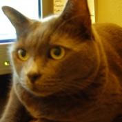 Brandy Owens profile image