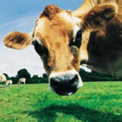 15 Reasons to Stop Eating Meat