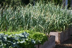 Beginner's Guide to Planning a Vegetable Garden