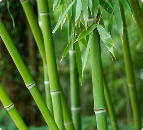 """What shakes the bamboo forests?"" -Master Akira Watanabe"