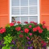 Exterior Shutters profile image