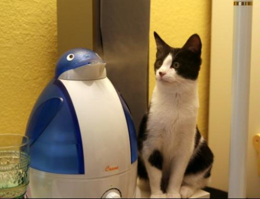 The Penguin humidifier by crane in action, as a cat looks on fascinated by modern day advancements in technology. A humidifier that looks like a penguin? Who would have thought?