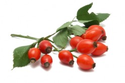 Using Rose Hip Essential Oils: What Are The Benefits?