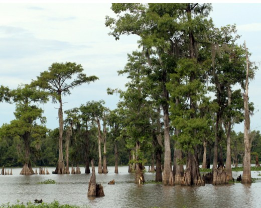 A Southern bayou.