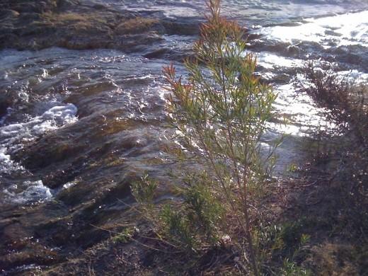 Flowing waters.