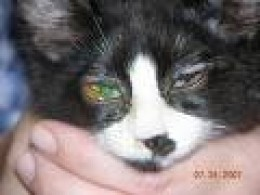 Rheumy Eyes In Cats