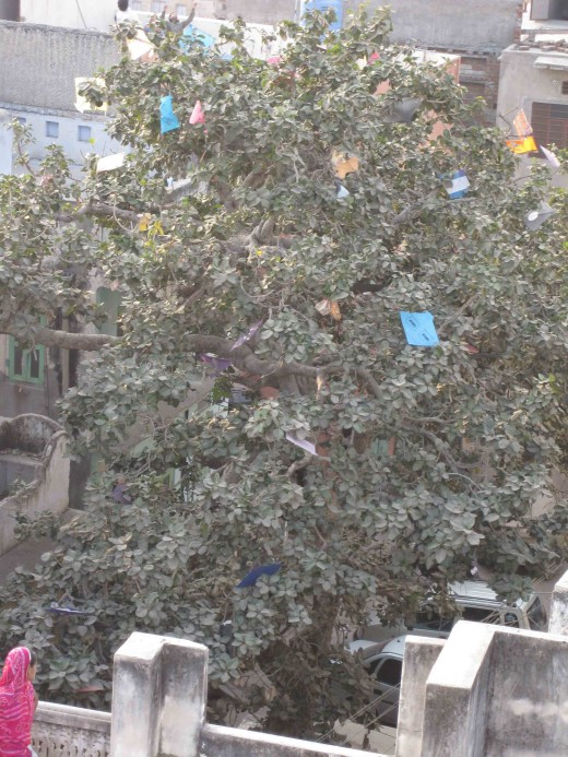 Tree ornamented with colorful kites (Patang)