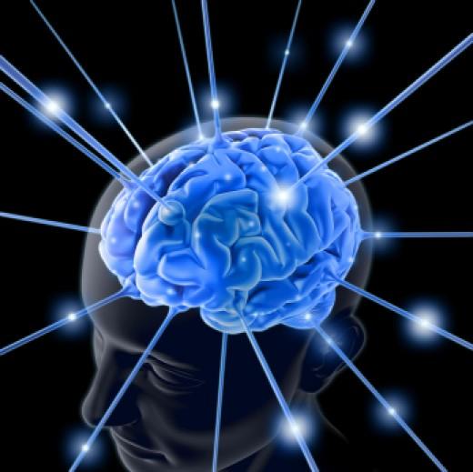 The Logical Brain Vs The Primitive Brain