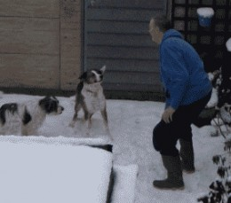 Hubby playing with the dogs in our yard. Don't know which one enjoyed the snow the most?