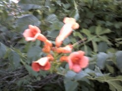 This cool plant that grows in my yard.  They look awesome but the ants love them.