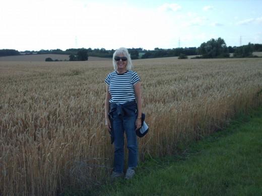 Corn field Saffron Walden