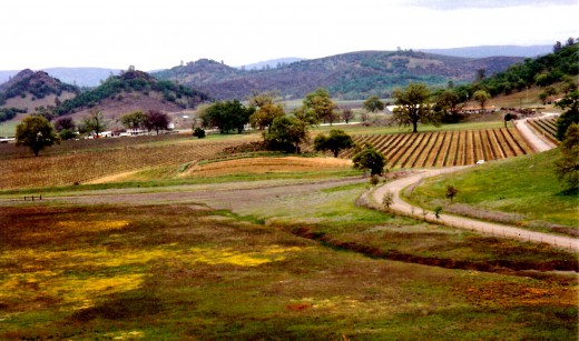 Final view of the winery and surrounding area as we took our leave from Guenoc Winery.