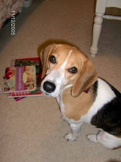 A Beagle's Journey - Our Wonderful Pet