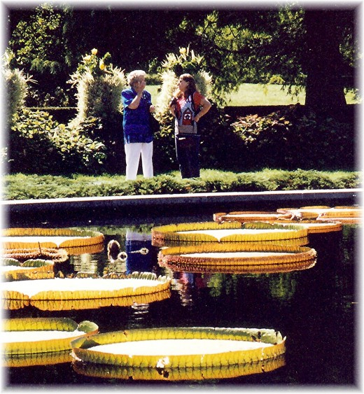 Huge water lily pads!