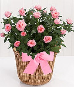Valentine's flowers in a basket proflower.com
