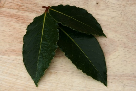 Bay leaves are shiny, deep green and have a leathery look.