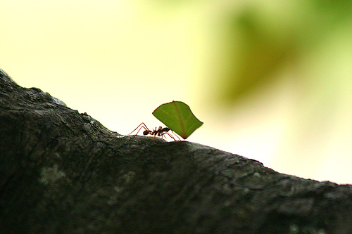 Do worker ants offer a clue to the existence of homosexuality? Image source: http://www.flickr.com/photos/davidden/87705598/