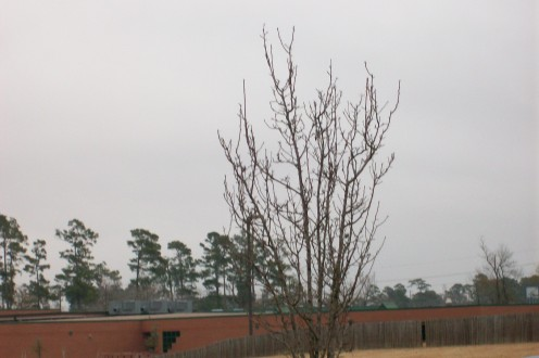 Dreary weather