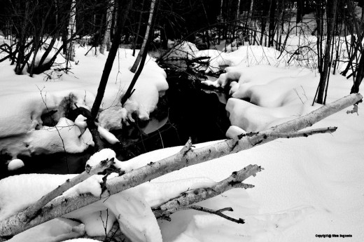 A downed birch still has some snow on it, but much of snow piled on objects is melting and sloughing off.