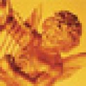 cupid51 profile image