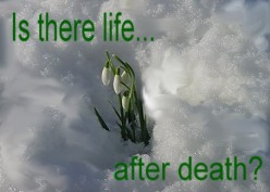 Reincarnation: Is There Life After Death?