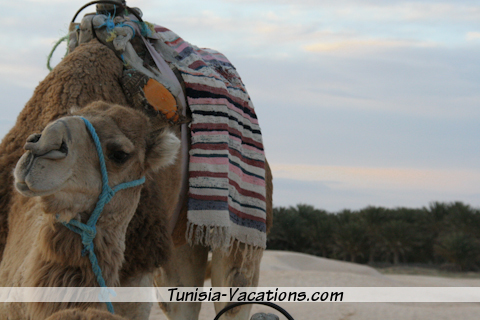 Take a ride on a camel