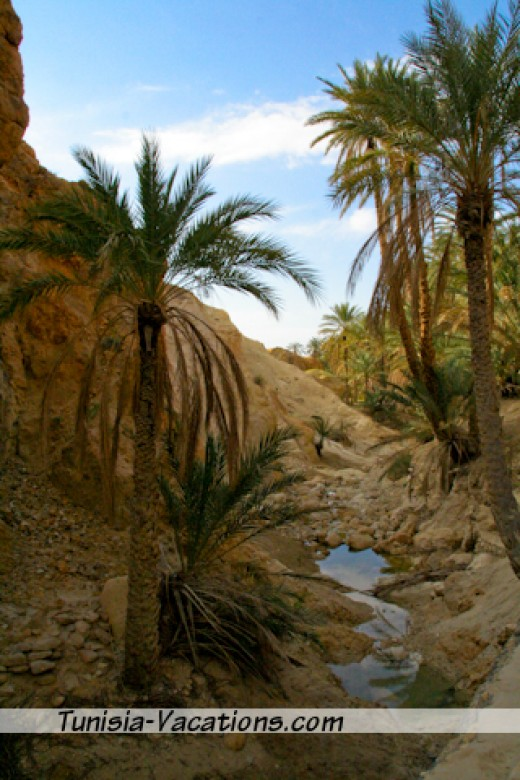 Visit an Oasis or two
