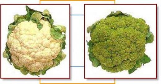 A cauliflower and a broccoflower. Either of these vegetables can be used in this recipe.