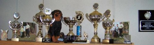 Just a few of our trophy's