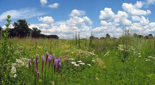 Tallgrass Prairie, by tlindenbaum