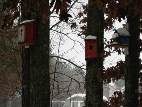 There seems to be at least one of these birdhouses on every tree in the back yard.