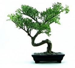 The Living Art of Bonsai