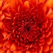 beautifulspring profile image