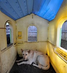 Build Or Purchase A Dog House