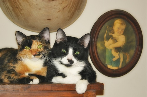 Here are two of my friends perched on the furniture.